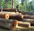Record wood products trade in China