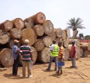 Ghana: Sharp drop in sawnwood export contract approvals