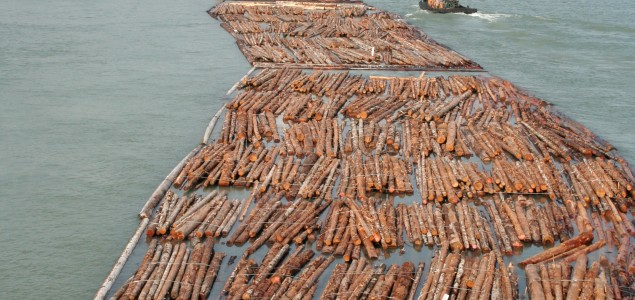Global softwood lumber trade close to 9-year high