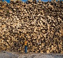 Global forest products markets likely 'bounce back' after sharp decline in mid-2020