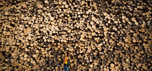 European log supply and lumber quality affected by bark beetle outbreaks and wildfires