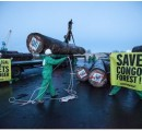 Illegal timber shipment in France to be seized by Greenpeace