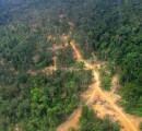 Brazilian Coalition proposes improved transparency to tackle illegal logging