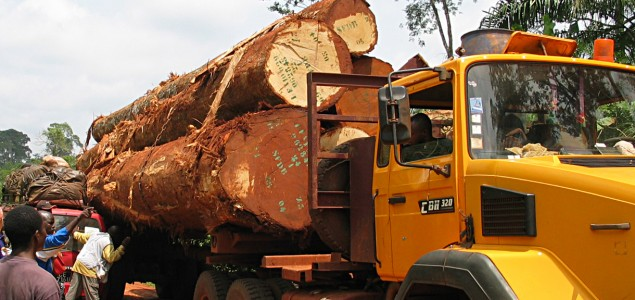Debate over log exports after ban in Indonesia