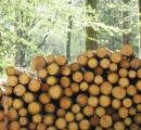 Overproduction and Asia- problems for the N. American lumber market