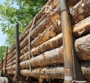 China's massive log exports rises prices and profits in the US