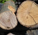 Lumber Liquidators fined $13.2 million for importing illegal wood from China