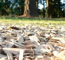 Australian foresters aim to develop the use of biomass