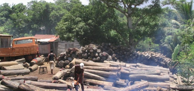 Ghana: Rosewood trade ban lifted