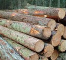Finnish roundwood prices mostly up during August