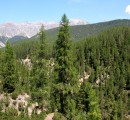 US forests are threatened by increasing drought