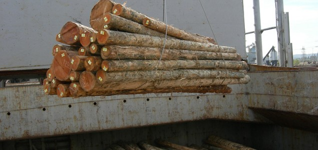 France: Worries on massive log exports to Asia