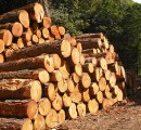 Ireland: Timber volumes estimated to double by 2035