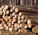 Roundwood prices in Estonia mostly up during August