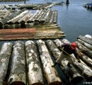 Malaysia: Optimistic outlook for timber exports in 2016