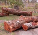 Australia's forestry sector continues to break records