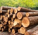 Timberlink Australia invests $10 million in New Zealand sawmill