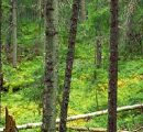 Finland: Forest industry is the country's largest exporter