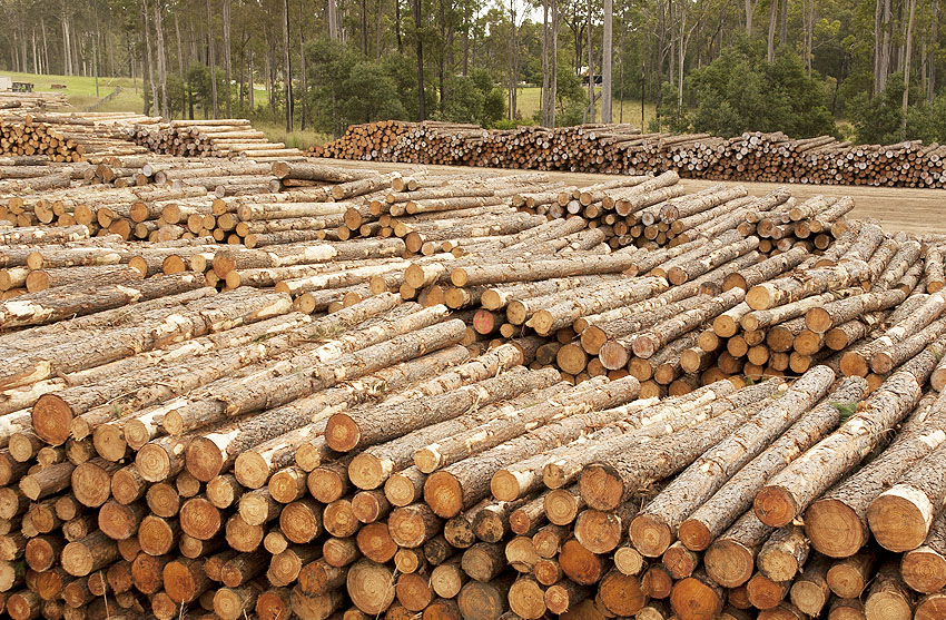 Https Www Globalwoodmarketsinfo Com New Zealand Log Prices Remain Stable In April
