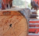 Giant sawmill to be build in Russia by 2019
