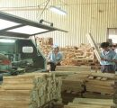 Vietnam's wood industry faces shortage in raw materials