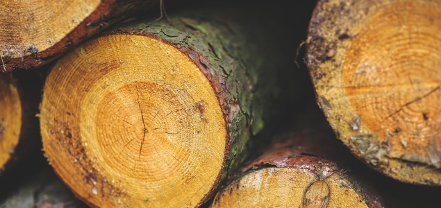 Finnish roundwood prices mostly up in September