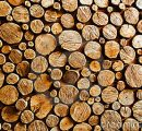 Estonian roundwood prices went all up during July