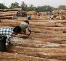 EU importers warned on Myanmar teak