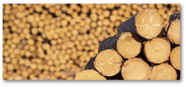 Demand for US softwoods in Mena region expected to climb