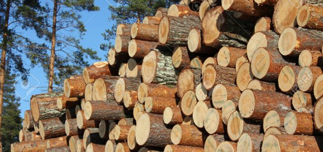 The German sawmill industry in difficulty due to massive amounts of beetle and storm wood