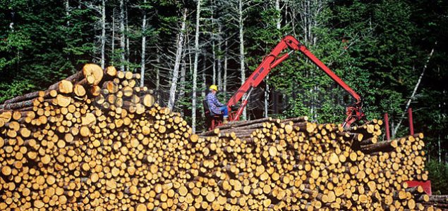 Pulpwood prices in North America on the rise in 1Q/19