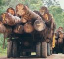Malaysia: Tropical timber exports reach 1 million m3
