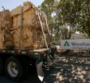 Weyerhaeuser to close lumber and plywood mills in Columbia Falls