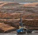 BC lumber exports grew once with SLA expiry