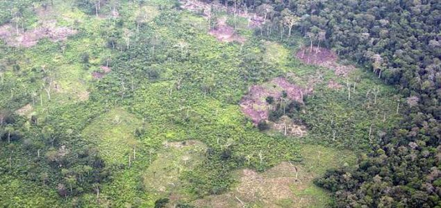 UK sanctions traders of Cameroonian timber under EUTR