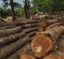 Changing profile of Indonesia's wood product supply