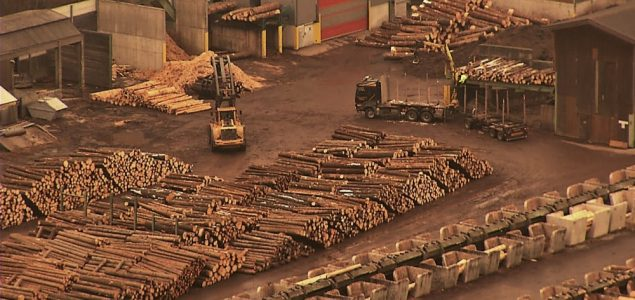 Schweighofer's continued sourcing of illegal timber exposed in new EIA video