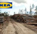 IKEA started logging in its own forests in Romania