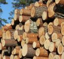 Prices for Finnish roundwood started to decrease in May