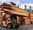 US lumber prices fall in mid June