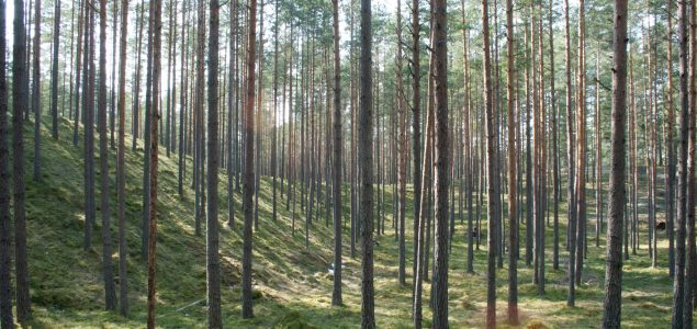 Latvia: Forestry products exports grow by 5%