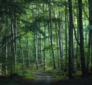 Merkel promises half a billion euros to revitalise German forests
