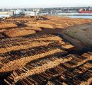 Rising softwood log stocks across China