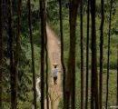 UN/FAO: State of the World's Forests 2016