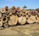 Sharp rise in Brazilian wood product exports