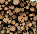 Finland: Rising roundwood prices this autumn