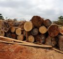 Wood products exported from Ghana drop sharply in Q1/2016