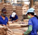Vietnam's timber exports to the EU forecast to hit $1 billion yearly by 2020