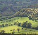 UK's forest resources at expiry point; sustainable practices required
