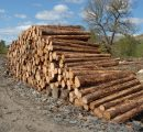 Softwood logs prices continue to fall in Sweden